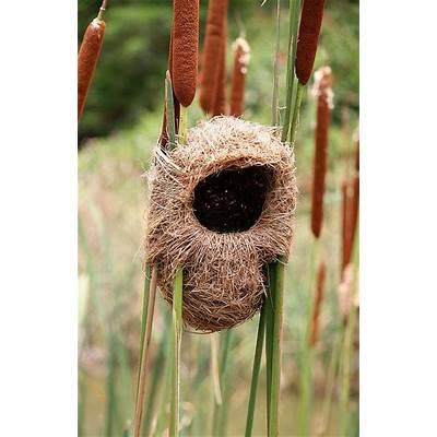 25  best ideas about Nests on PinterestHummingbirds