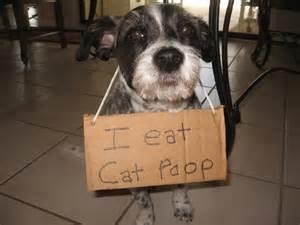 cat pooping shame i eat cat animals