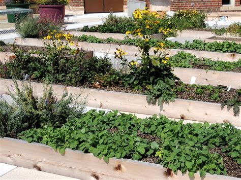 Rothenberg Rooftop Garden - Greenroofs.com