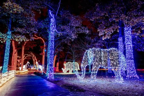 lights zoo detroit wild toledo memphis cincinnati holiday hanford ohio metro joshua winners festival courtesy