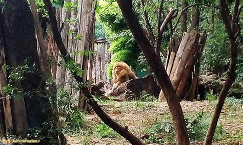 ingresso zoo di pistoia lo zoo di pistoia e passione patatofriendly