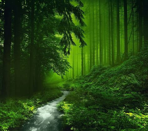 Green Forest Backgrounds by Green Forest Wallpaper Hd Wallpapersafari