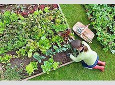 25 Tips for Starting a Small Vegetable Garden INSTALLIT