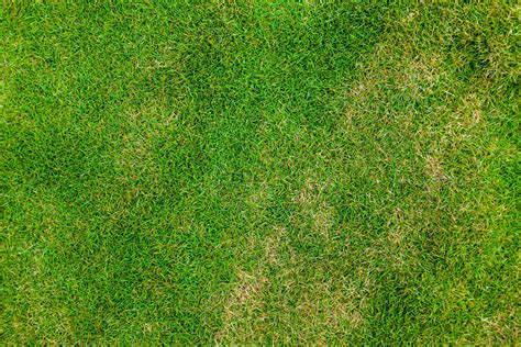 Seven Free Grass Textures Or Lawn Background Images