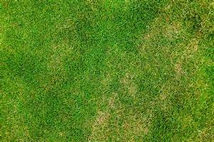 Seven Free Grass Textures or Lawn Background Images | www ...
