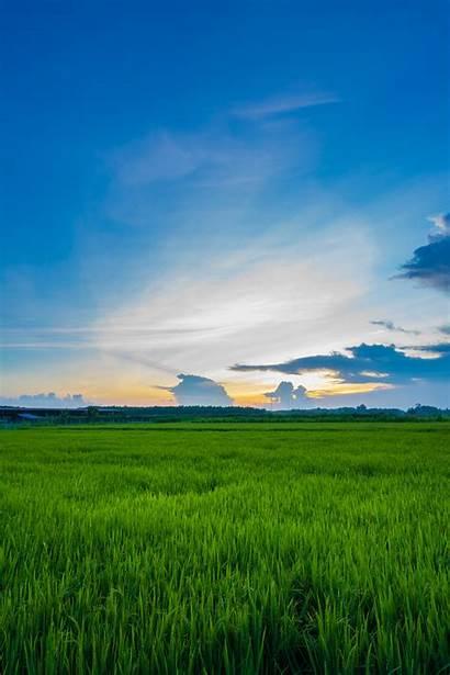 Grass Field Nature Tessar Vario Sunset Agriculture