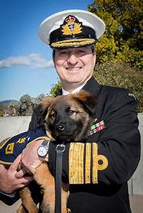 World-first service medal for military working dogs ...