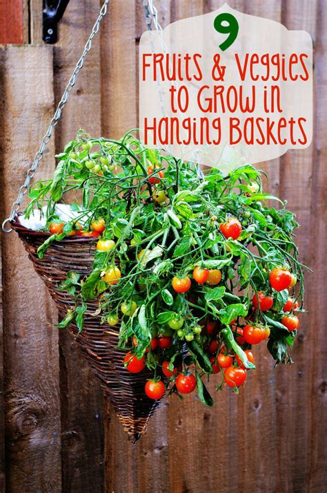 Hanging Vegetable Garden by Pin By Sherri Osborn Family Crafts On Gardening Info