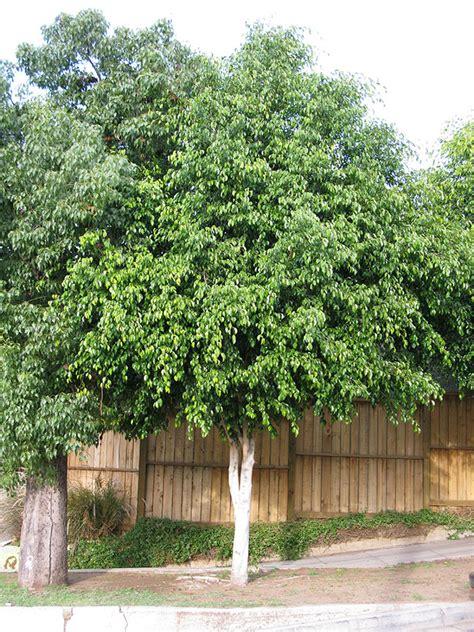 ufei selectree  tree selection guide