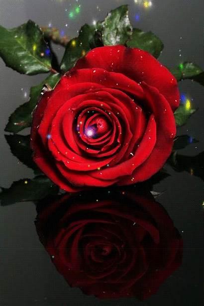 Rose Animation Scraps Decent Animated Roses Rosa