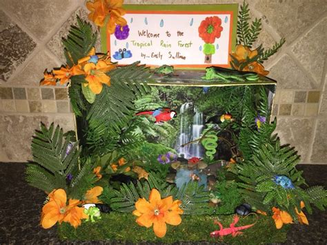 tropical rainforest diorama rainforest project