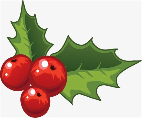 holly decorations  christmas holly clipart christmas