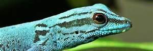 Große Reptilien Für Zuhause : pflanzenfresser herpetal futtermittel mineralstoffe und ~ Lizthompson.info Haus und Dekorationen