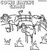 Grass Coloring Pages Colorings Nature Grass2 Coloringway sketch template