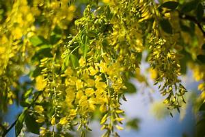 Rankpflanzen Winterhart Immergrün : winterharte kletterpflanzen robuste sorten f r den winter ~ A.2002-acura-tl-radio.info Haus und Dekorationen