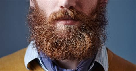 bearded shedding tips beard grooming tips from the experts s journal