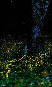 Fireflies Live Wallpaper free APK android app