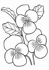 Pansies Coloring Pages sketch template