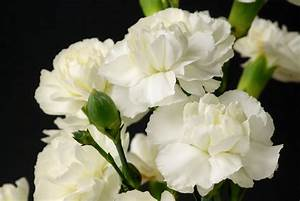 List of Flower Names With Their Meanings and Alluring Pictures