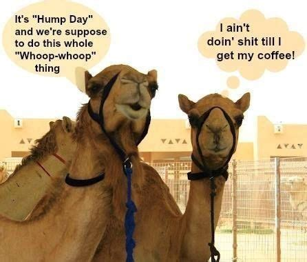 Saturday morning coffee happy broken memes funny night spoken laugh quotes mr till winkgo goodnight. Pin by Laura Peaire on hump day in 2020 | Wednesday coffee, Hump day humor, Funny hump day memes