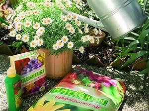 Welche Pflanzen Für Balkon : welche pflanzen passen f r balkon und terrasse lagerhaus ~ Michelbontemps.com Haus und Dekorationen