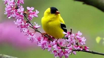 Birds Bird Exotic Wild Wallpapers Animal Animals