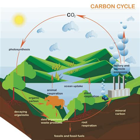 Processes And Pathways Of The Carbon Cycle A Level Geography