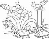 Coloring Pages Insect Bug Getdrawings sketch template