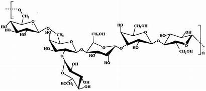 Polysaccharide Molecules Structure Polysaccharides Extracellular Found Bacterial