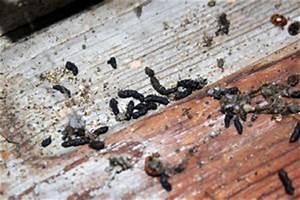 Maus Im Haus Was Tun : ratten kot anzeichen von ratten im haus garten oder keller ist das rattenkot tiere katzen ~ Orissabook.com Haus und Dekorationen