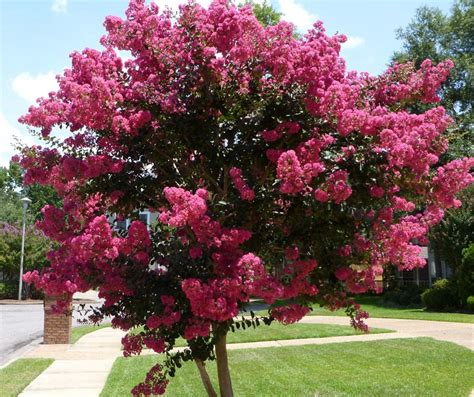 best ornamental trees trees ornamental 100 images 10 best ornamental trees for southeastern pa gardens turpin