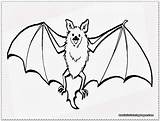 Bat Coloring Pages Realistic Clipart Wings Drawing Flying Printable Bats Baseball Battleship Flower Getdrawings Getcolorings Template Sun Comic Excellent Webstockreview sketch template