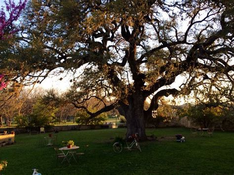 The Backyard At Laurel Tree Utopia Tx This Is The Spot