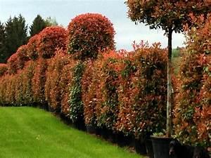Pflanzen Als Sichtschutz : immergr ne pflanzen als sichtschutz einfach sichtschutz terrasse ~ Sanjose-hotels-ca.com Haus und Dekorationen