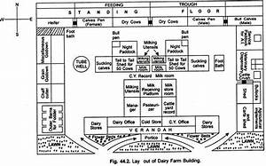 Dairy Cattle Housing and Layout of Dairy Farm