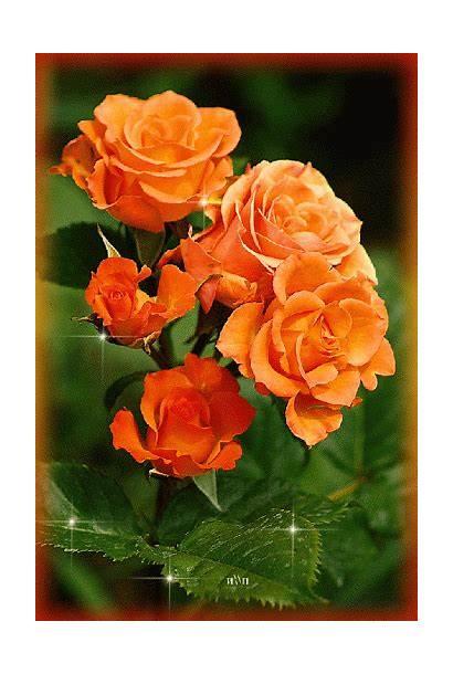 Flores Gifs Orange Hermosos Roses Flowers Encontradas