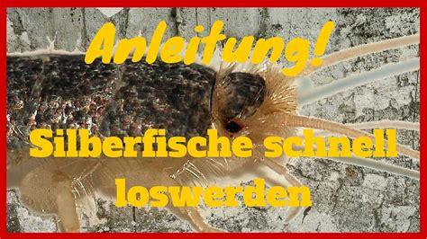 Was Essen Silberfische was essen silberfische wohn design