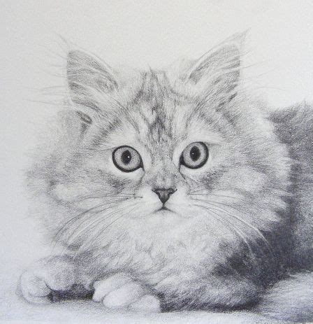 pet portraits   draw fur  graphite cat step