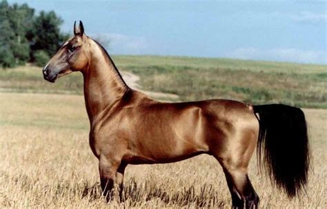 horse race most breeds horses popular must know