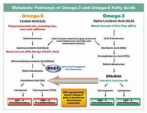 Essential Fatty Acids Definition And Notes In Biology