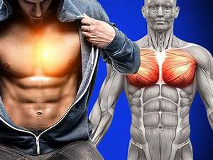 Chest Exercises Archives