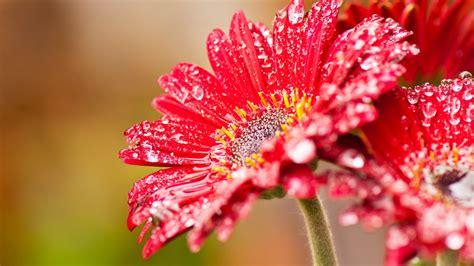 Flower Wallpaper Hd Free Download