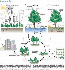 Forests And Global Warming On Pinterest