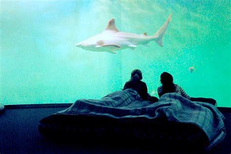 chambre d hotes ille et vilaine grand aquarium de malo dormir au milieu des requins