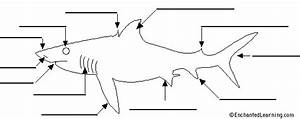 Label Shark Anatomy Printout