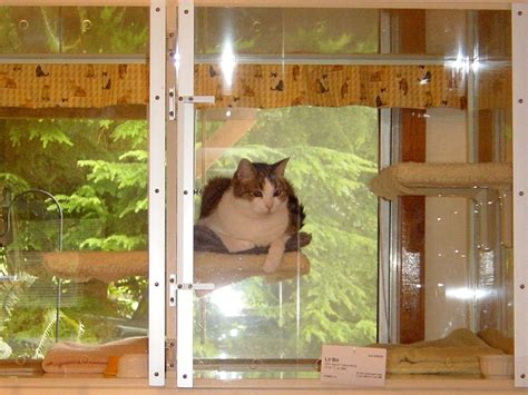 Cat Boarding Cattery Services At Our Cats Only Pet Cat