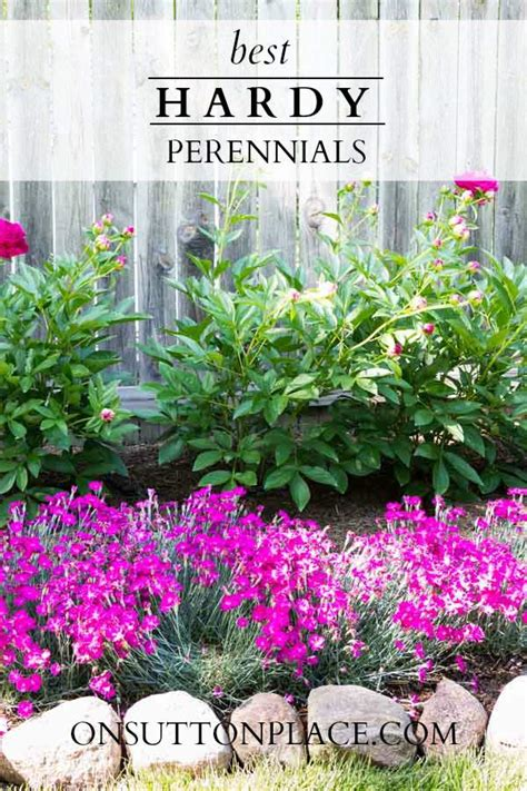 what are hardy perennial plants hardy plants the diy gardener s guide part 2 on sutton place
