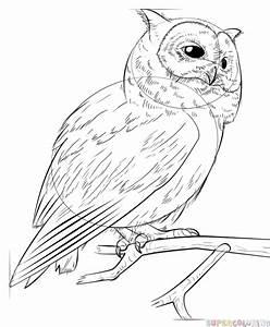 Flying Owl Outline Drawing | www.pixshark.com - Images ...