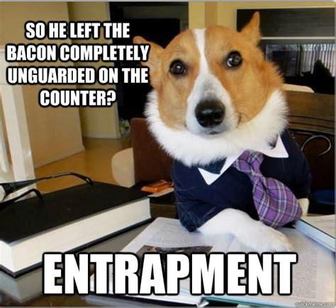 Law Dog Meme - top five lawyer dog internet meme petcarerx