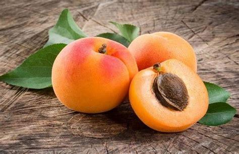 Apricot Là Gì? Những Điều Nên Biết Về Apricot